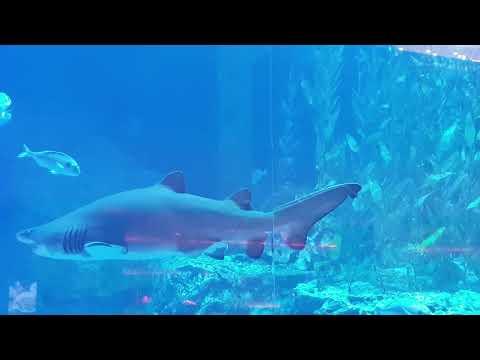 Dubai Aquarium | Underwater Zoo | Dubai Mall | Shark Tank | YouTube
