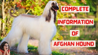 || Afghan Hound Dog Breed Information 2021 || Afghan Hound Grooming ||