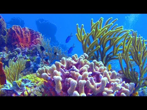 Planet Earth, The Undersea World (4K) - A Underwater 3D Channel Film