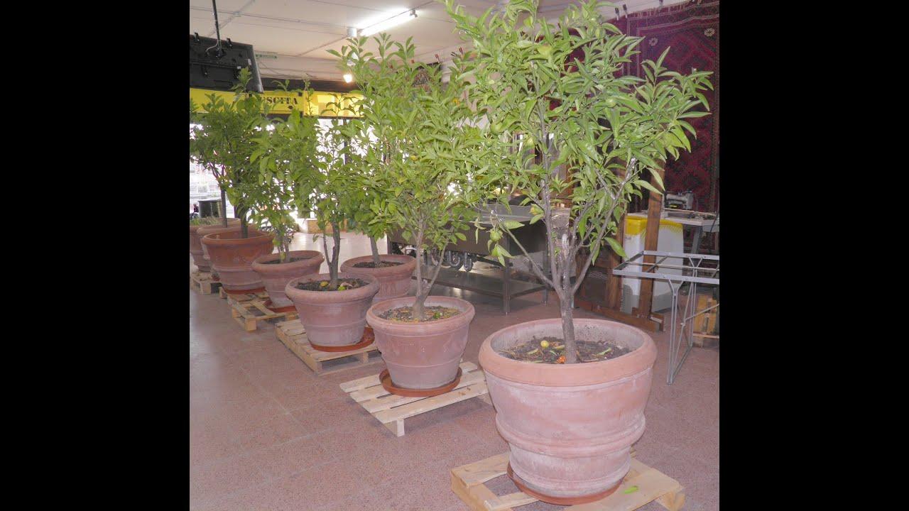 Asta vasi in terracotta con agrumi youtube for Vasi in terracotta economici