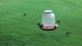 Large One Gallon (128oz) Hummingbird Feeder