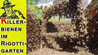 Killerbienen greifen an!