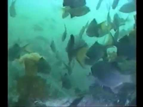 Washington Scuba Diving -- Sund Rock