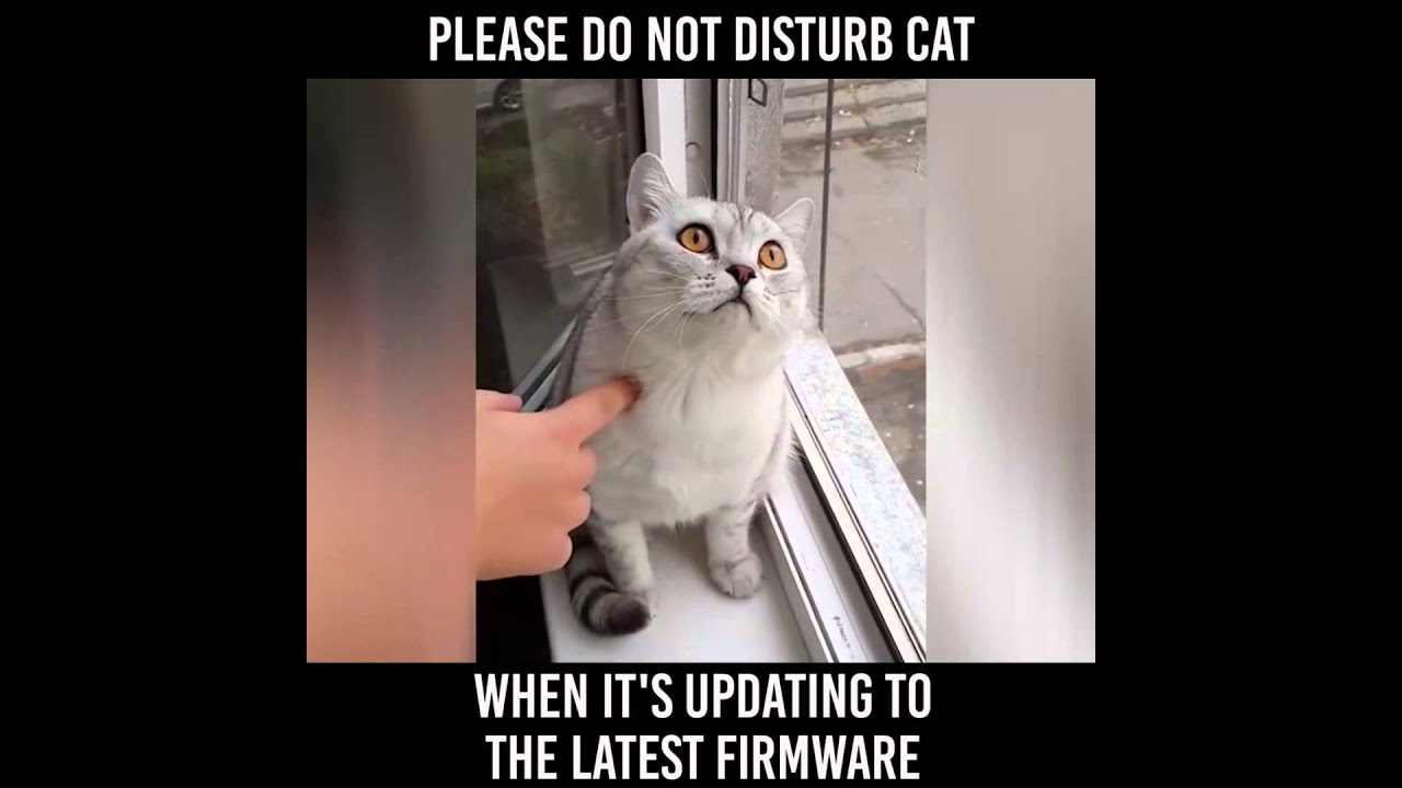 PLEASE DO NOT DISTURB CAT! - YouTube