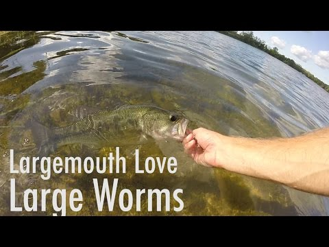 Large Worms for Late Summer Largemouth