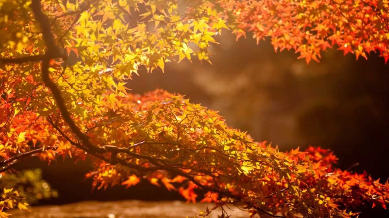 Моя душа - всего лишь Осень... - YouTube