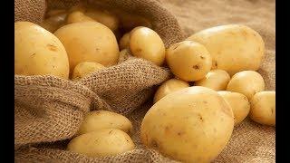 Кролики и картофель: правильный рацион питания