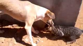 briga de cao e gato