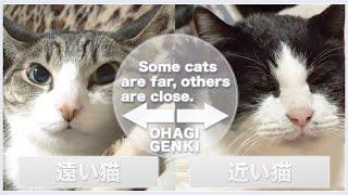 遠い猫と近い猫