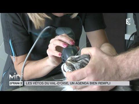 ANIMAUX : Les vétos du Val-d'Oise, un agenda bien rempli