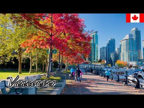 🇨🇦Vancouver Autumn Walk - Coal Harbour with Autumn Foliage - 【4K 60fps】