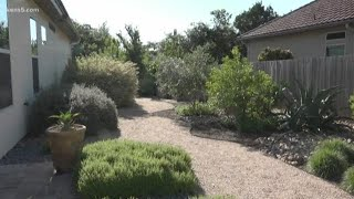 Tips and tricks for a green and thriving garden during summer