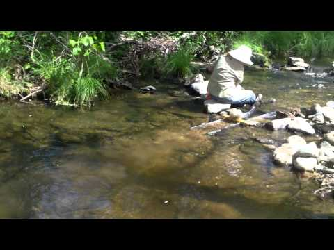 Sluicing on Woods Creek in Jamestown, CA  May 3, 2014  Kay &