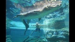 видео Смертельный аттракцион с крокодилом