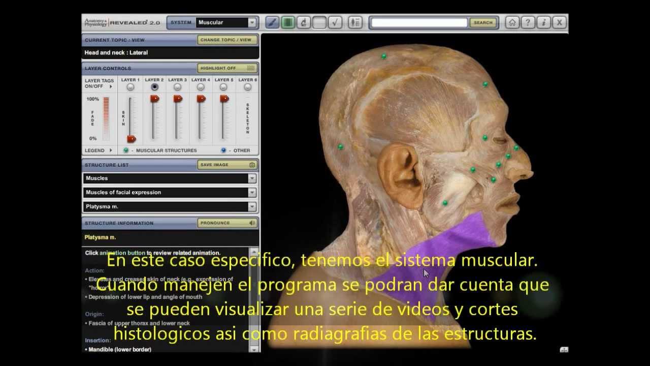 Anatomia diseccion (APR) - YouTube