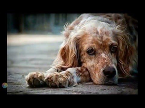 О старой собаке замолвите слово. Мы в ответе за тех кого приручили