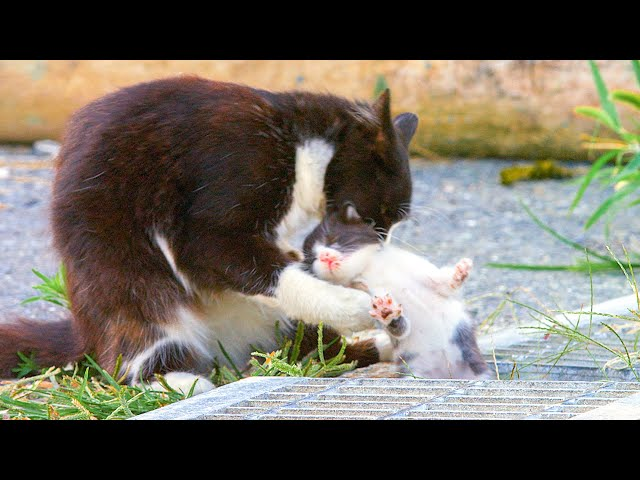 10 Day Old Kitten Falls In A Gutter! | Pets: Wild At Heart | BBC Earth