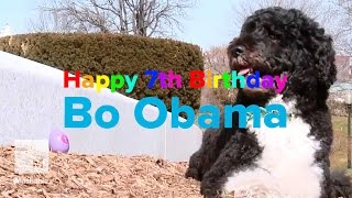 Happy Birthday, Bo Obama: The First Dog Turns 7 | Mashable News
