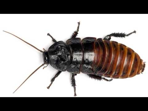 Science Explains Why We Hate Cockroaches