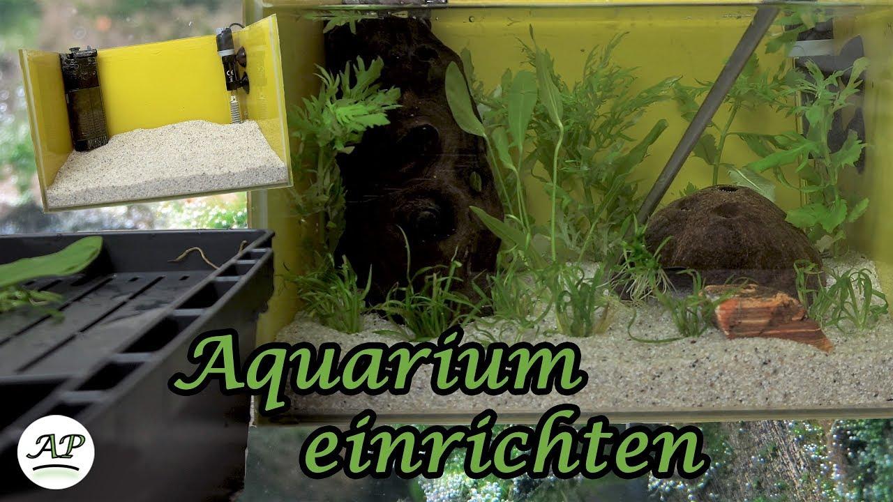 Nano Aquarium Einrichten Aquarienportal Youtube