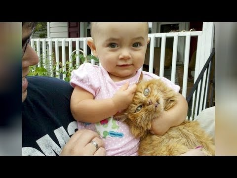 99% CHANCE that you will DIE LAUGHING! – Super FUNNY KIDS & ANIMALS videos compilation