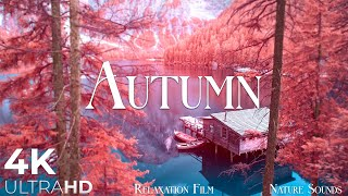 Natures 4K AUTUMN, Amazing Scenic and Beautiful Relaxing Music by Relaxation Film
