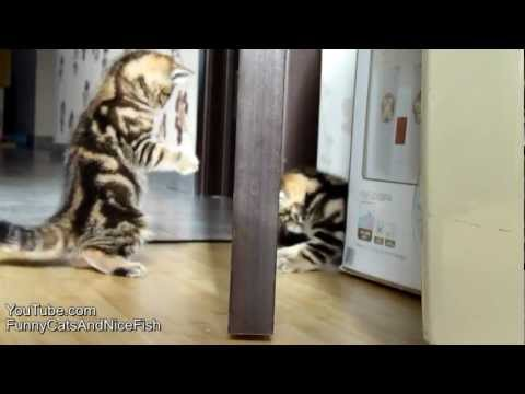 Funny kittens playing with magic door