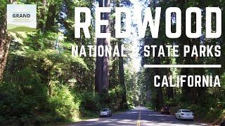 Ep. 53: Redwood National Park   California RV travel camping
