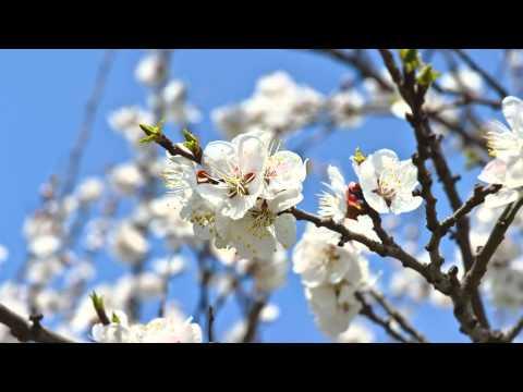 Forgive Before Sleep - A spoken meditation for Forgiveness, Renewal and Peace