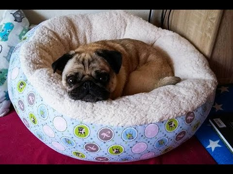 diy hundekorb n hen youtube. Black Bedroom Furniture Sets. Home Design Ideas