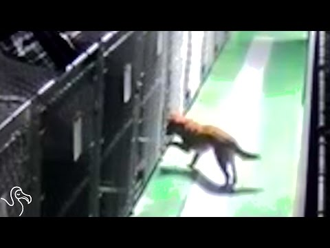 Dog Escapes Kennel to Comfort Lonely Pups | The Dodo