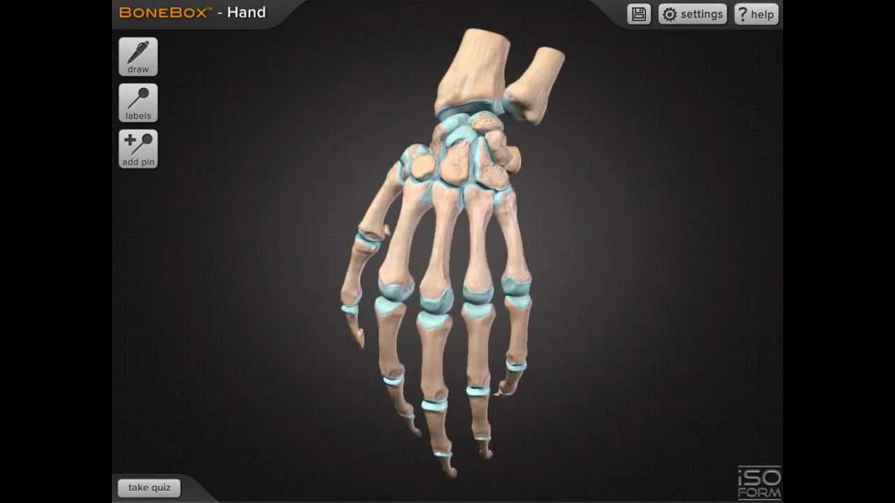 INTERACTIVE - BoneBox™ Hand: Anatomy App for Mac and iPad