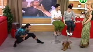 Притула дразнит собаку в эфире