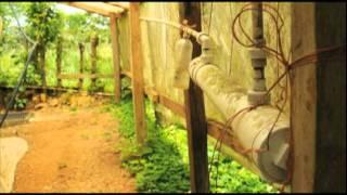Documental sobre Sistemas Silvo Pastoriles en Darien, Panamá.mov