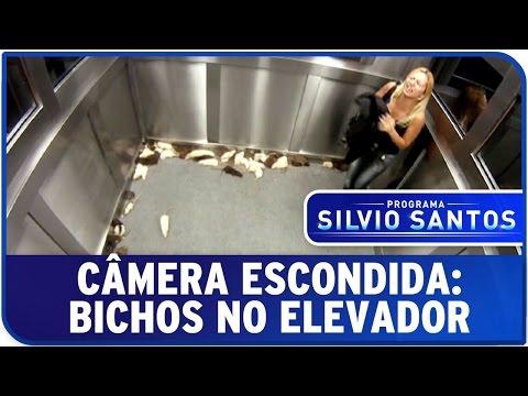 Câmera Escondida: Bichos no Elevador