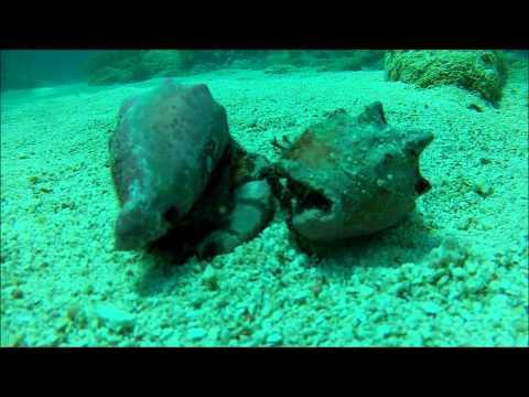 Molasses Reef, Key Largo SCUBA Dive #1 GoPro Dive Housing