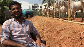 About Hallikar bullocks  maintenance by Varthur Santhosh