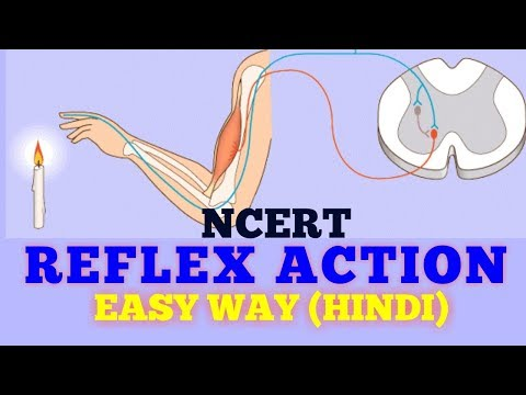 REFLEX ACTION (EASY WAY) / NCERT-- HINDI