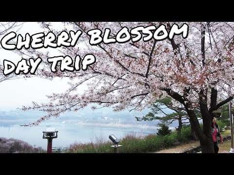 Cherry Blossom Festival at Jecheon (Cheongpung Lake) - Wilderman Weekends #3