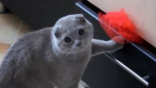 ЛУЧШИЕ ПРИКОЛЫ с котами 2017 Самые смешные видео про кошки и коты Подборка прико