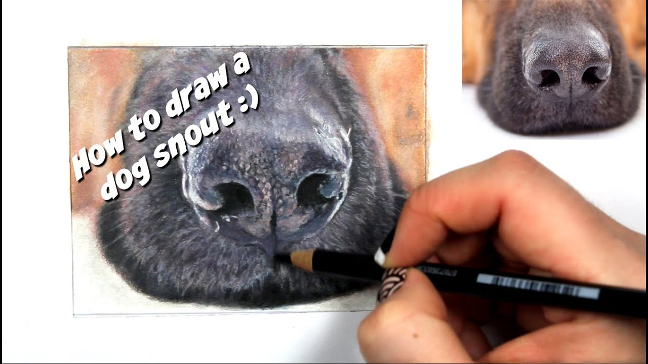 Tutorial #8  How To Draw A Realistic Dog Snout  Channel Sheldene Fine Art   Youtube