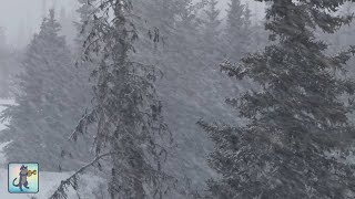 2 HOURS of Relaxing Snowfall: Beautiful Falling Heavy Snow - The Best Relax Music 1080p HD