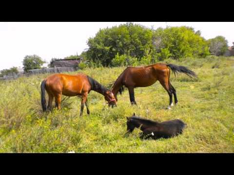 Сайт о лошадях — Мой Конь, лошади, все о лошадях, разные