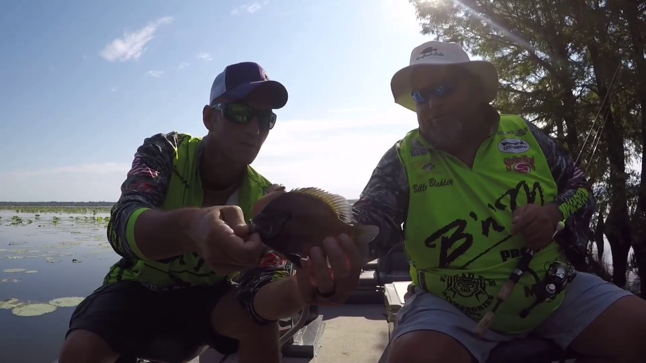 Monster Bluegills at Reelfoot Lake with Bluebank Resort - YouTube