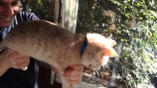 Кошка-автомат