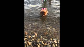Zoe Pomeranian Puppy Girl Swimming