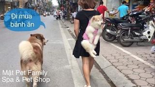 Mật vs Moon theo chủ đi mua đồ, cả phố náo loạn vì quá cute - Mật Pet Family