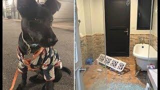 Хозяйка ругала собаку, которая лаяла и не хотела идти домой. А через несколько минут земля задрожала