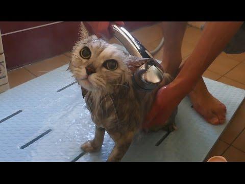 Leo takes a bath ♡ 1年ぶりのお風呂