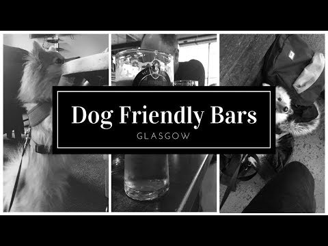 Dog Friendly Bars | Glasgow
